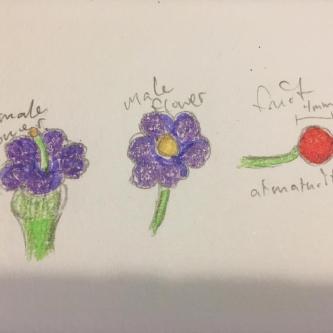 Athvurun flower.jpg