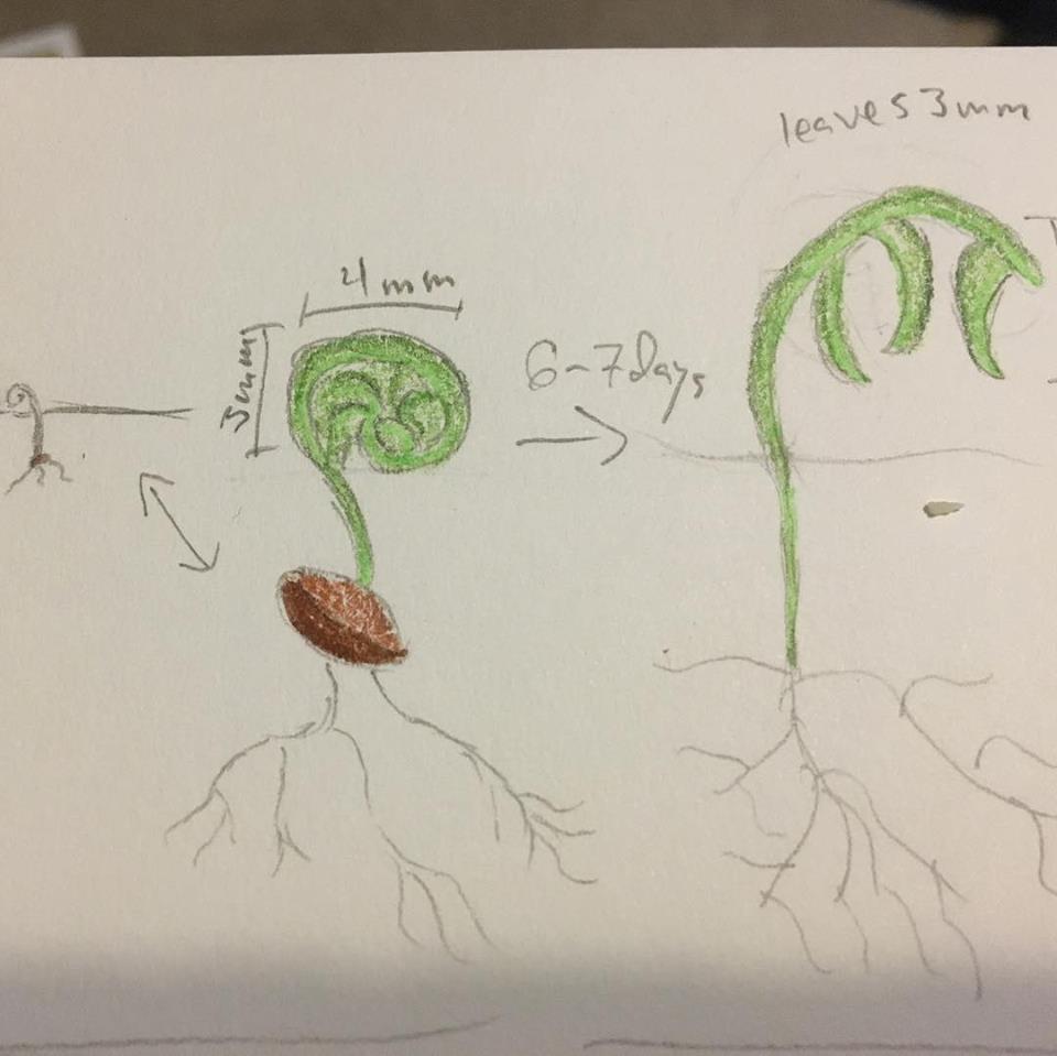 Athvurun sprout